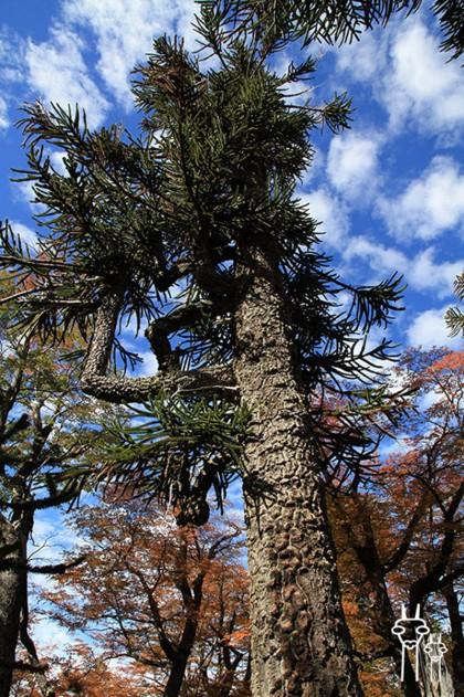 Puyehue_travel_Chile_Villarica_02
